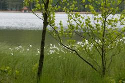 etang_et_arbre